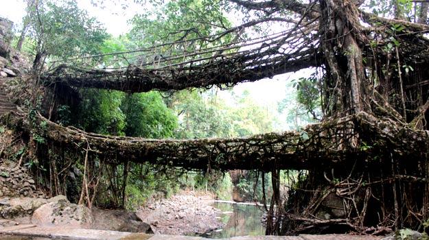 Double-decker living root bridges in Nongriat near Cherrapunji