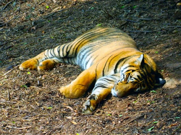 Assam State Zoo