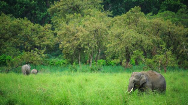 Jim Corbett National Park in Uttarakhand