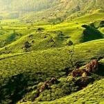 Munnar-destination