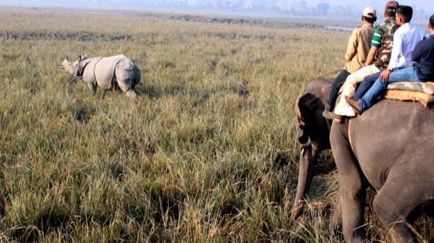 Pobitora-safari