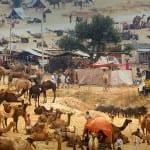 Pushkar-TravelIndia