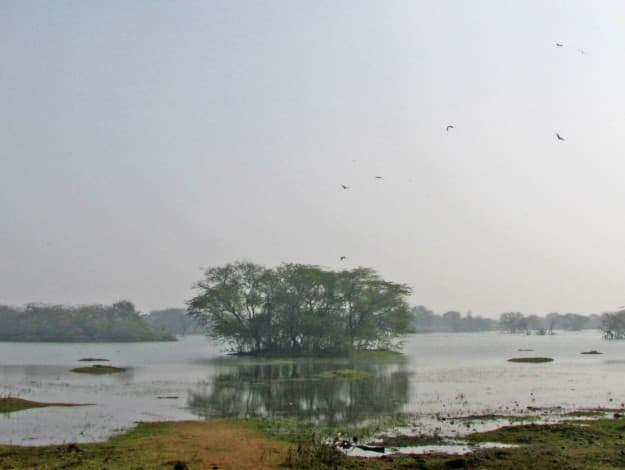 Sultanpur_Bird_Sanctuary_Haryana