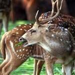 chail-wildlife