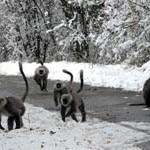 himalayan-national-park