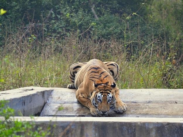 sariska-tiger-reserve