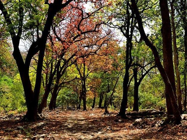 sitamata-wildlife-sanctuary