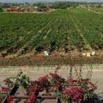 sula-vineyards