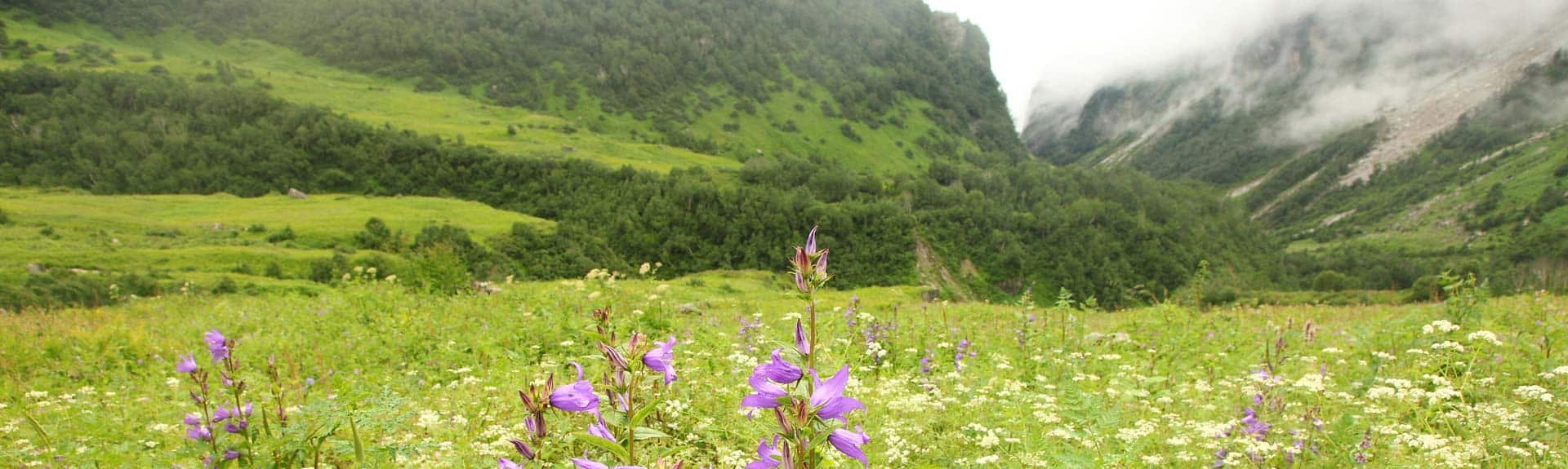 valley of flowers tourism valley of flowers tourist places