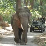 wildlife-safari-bandhavgarh