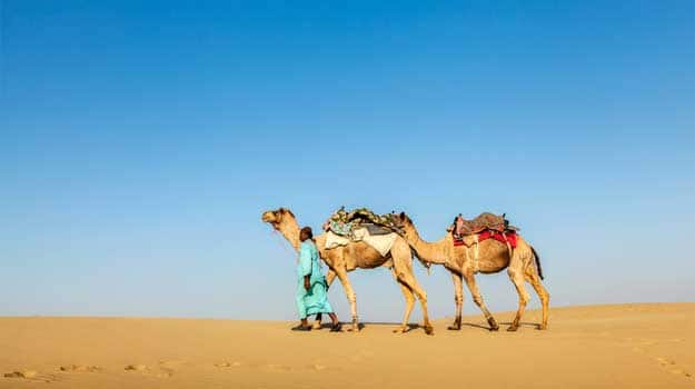 India-Rajasthan-travel-background---Indian-cameleer-(camel-driver)-with-camels-in-dunes-of-Thar-desert.-Jaisalmer,