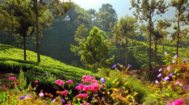 Conoor-tea-plantations