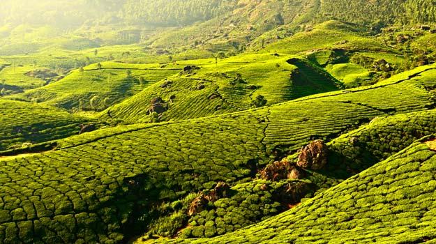 Kerala_Munnar2