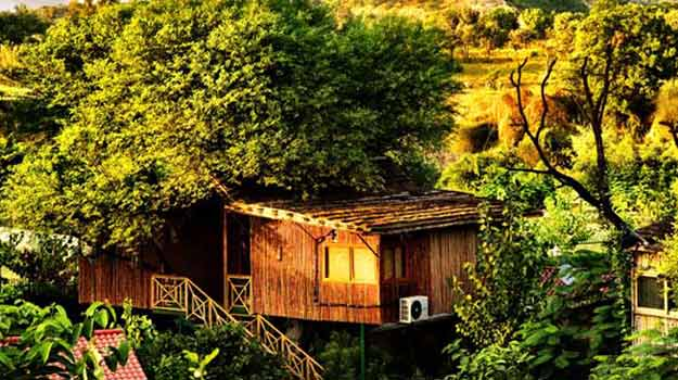 Tree-House-Jaipur