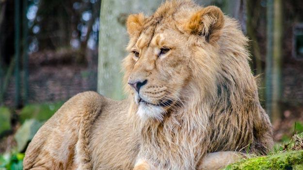 short note on endangered animals