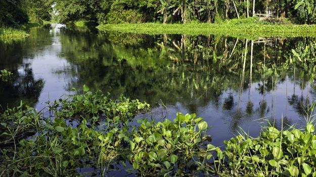 Majuli-island