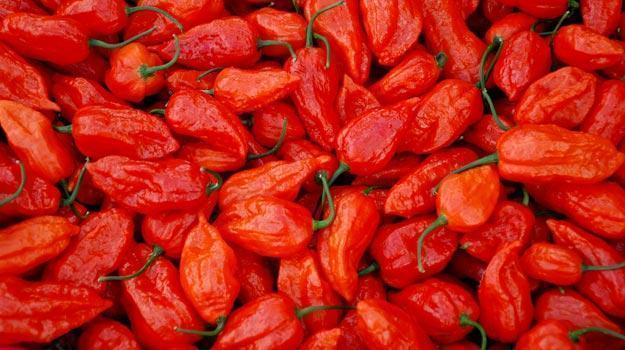 Naga-chilli