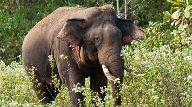 Wayanad-elephant
