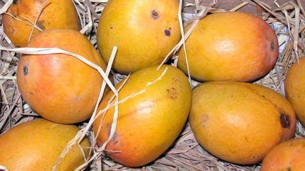 8 types of mangoes which you must try this summer season! | News