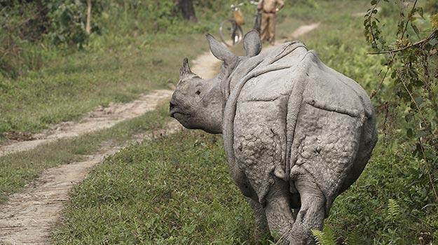 Assam_Guwahati_Kaziranga-National-Park_One-horned-rhinoceros-in-the-Kaziranga-National-Park_IWPL3