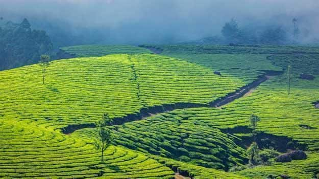 Kerala_Munnar_Picturesque-view-at-Munnar