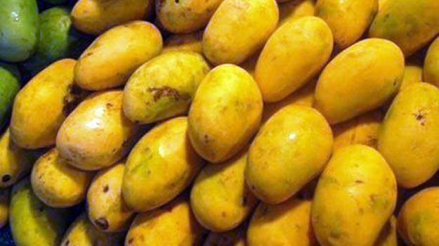 Mango-dasheri
