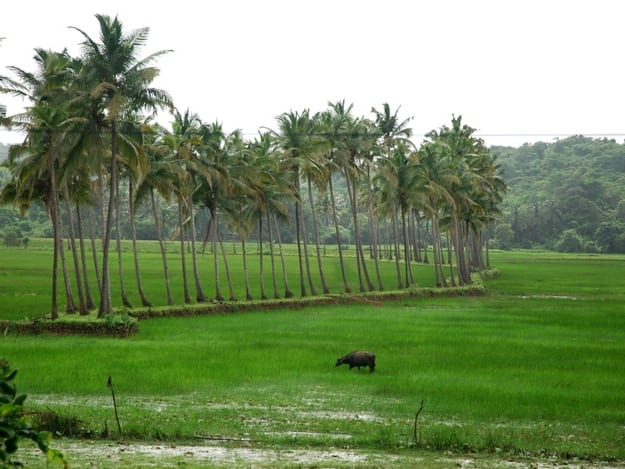 Photograph courtesy: Goa Tourism