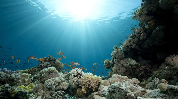 scuba 1