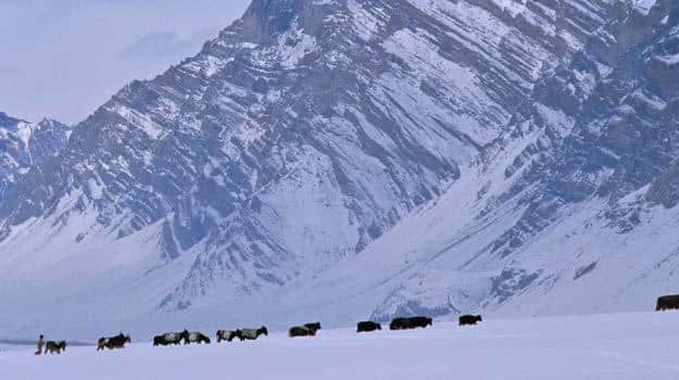 2 Jammu-and-Kashmir_Zanskar_Farmer-with-animals-in-Zanskar_IWPL2