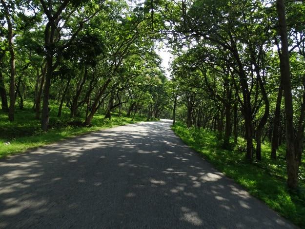 Mudumalai_Tiger_Reserve,_Tamil_Nadu_DSC00747