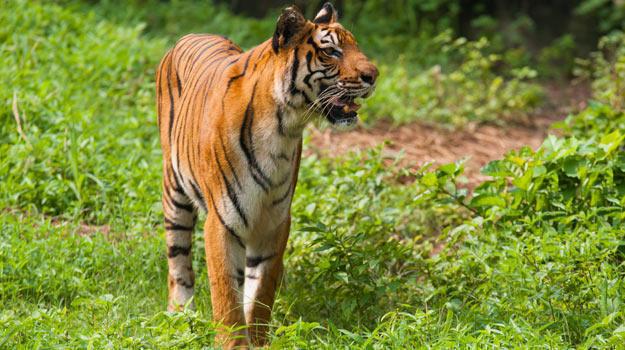 Sundarbans-Main