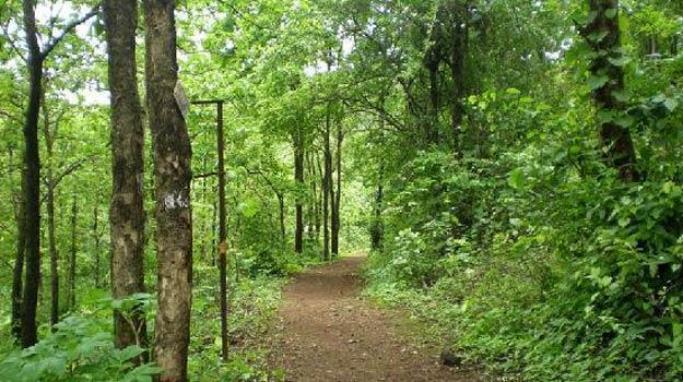 durshet-forest-lodge