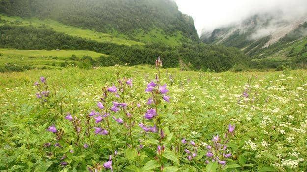 Valley-of-flowers best time