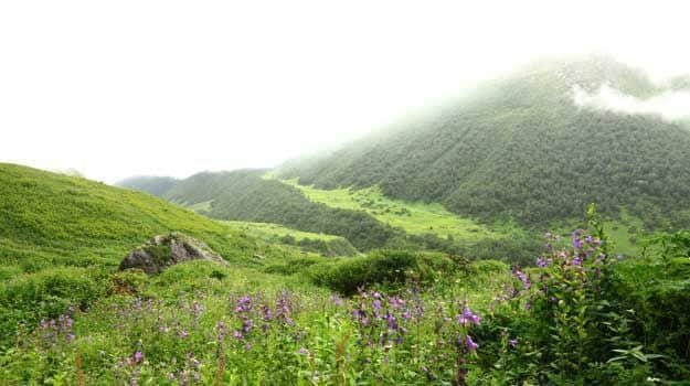 2 Valley-of-flowers
