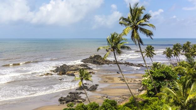 Goa-weed