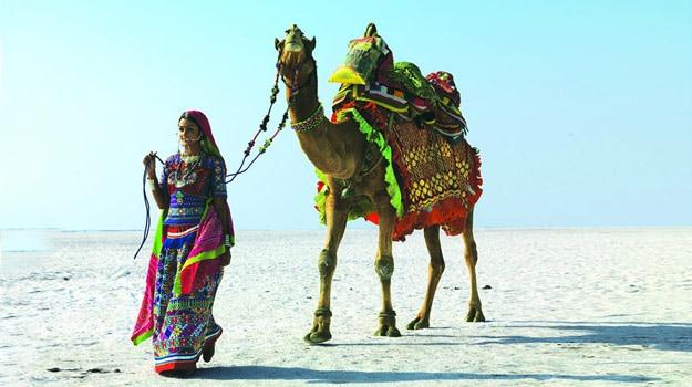 camel ride in kutch