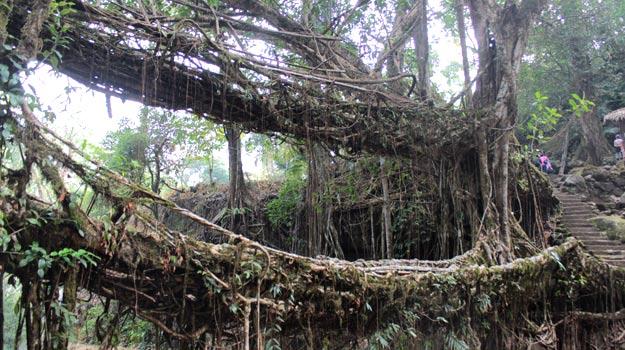 Double-decker-living-root-bridge