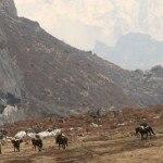 Sikkim Goecha-La