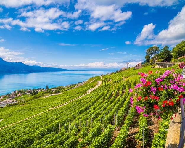 21Switrzerland-Lavaux-wine-region
