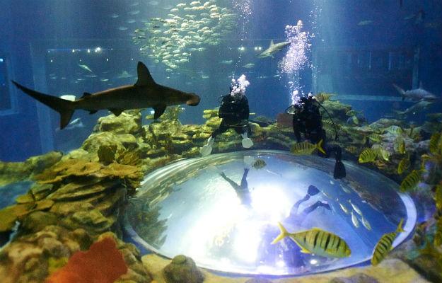 22-ocean-theme-park-hong-kong-4