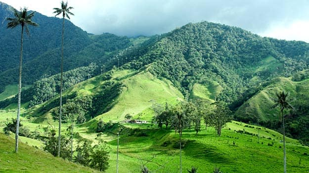 Colombia-Cocora-valley-shutterstock_334806071