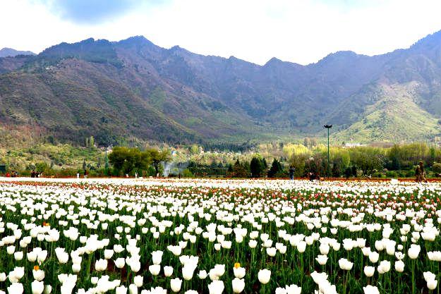 16-travel-tulip-garden-srinagar-4