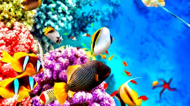 1travel-great-barrier-reef1