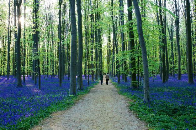 Belgium17-spring-forest-Halle