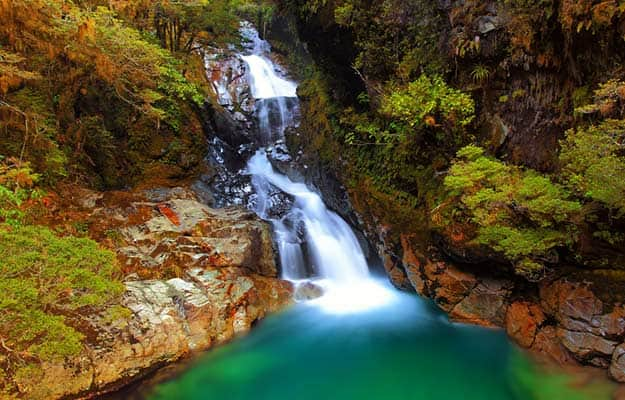 New-Zealand-Falls-creek-Fiordland-