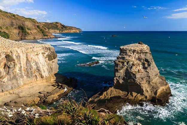 New-Zealand-Muriwai-beach-West-coast-North-Island-Auckland