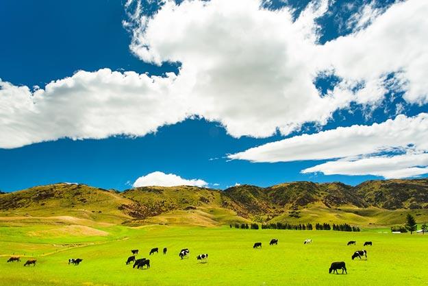 New-Zealand-farmland