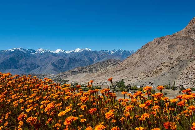 Ladakh-2-shutterstock_254968207