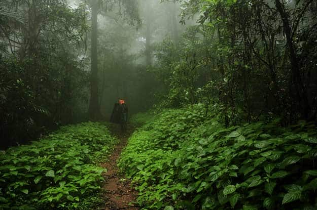 Agumbe rainforest in the monsoon
