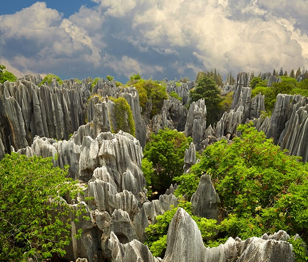 Stone-forest